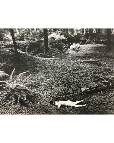 Wynn Bullock - Child in Forest [Print] - 1975
