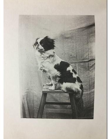 Keiichi Kawai - Animal Photobook - 1897