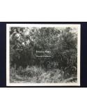 Hiroyuki Furuhashi - Priming Water - 2015